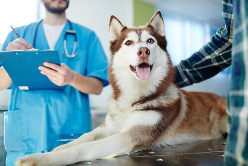Psoriasi nei cani: cosa possiamo fare?