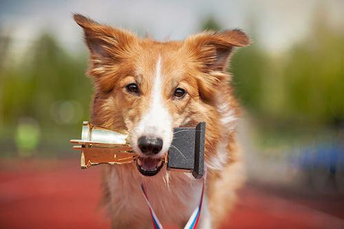 I cani più talentuosi del mondo: quali sono?