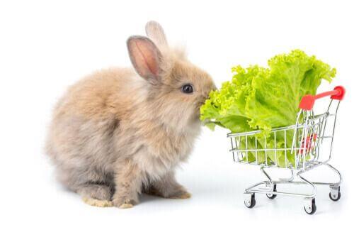 I conigli possono mangiare il pane? Meglio l'insalata.