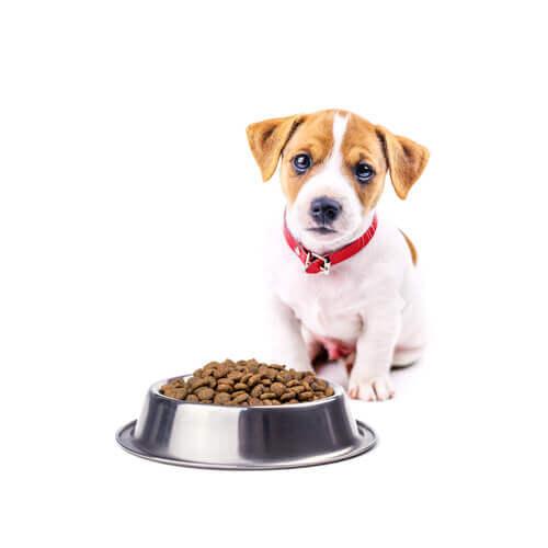 Cucciolo di cane che guarda una ciotola piena di croccantini.