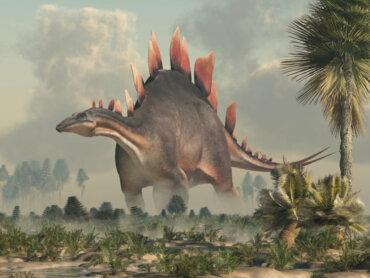 Stegosauro: un antico rettile dalla coda minacciosa
