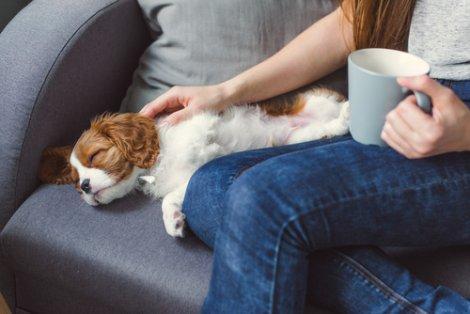 Donna che accarezza un cane su un divano.