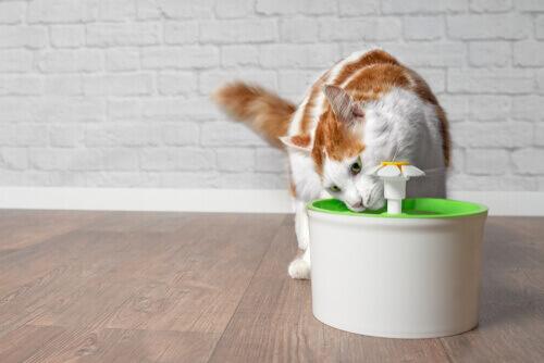 Gatto che beve da un dispenser per l'acqua.