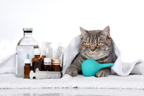 Malattie ereditarie nei gatti: quali sono le più comuni?