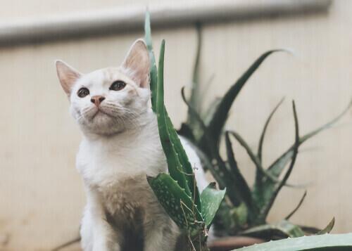 Gatto vicino ad una pianta.