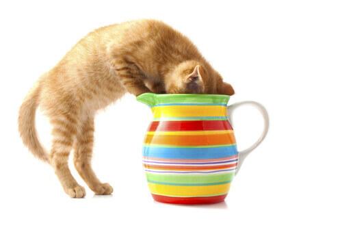 7 sostanze nocive per il vostro gatto