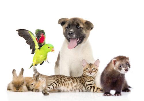 Animali domestici: l'importanza di essere dei padroni responsabili