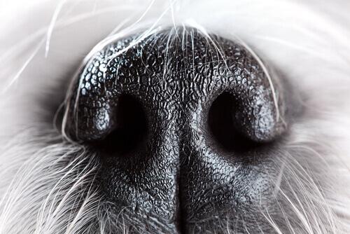 Il naso del cane: 6 curiosità che vi lasceranno a bocca aperta