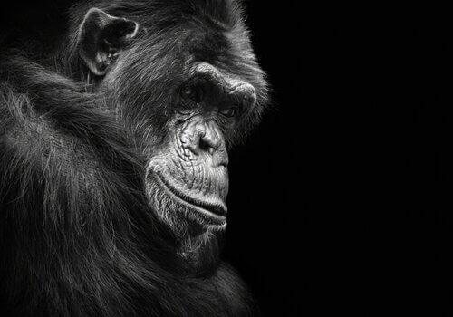 6 animali che possono soffrire di depressione