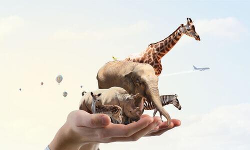 Persona che tiene in mano un ecosistema.