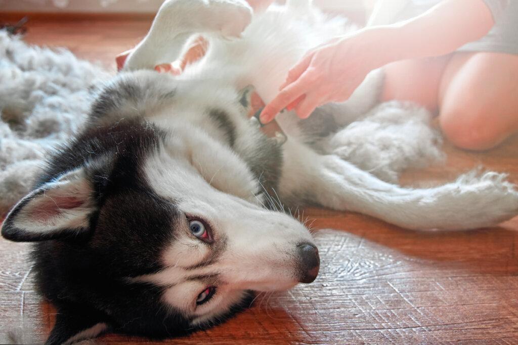 Problemi digestivi nei cani: sintomi, cause e trattamento