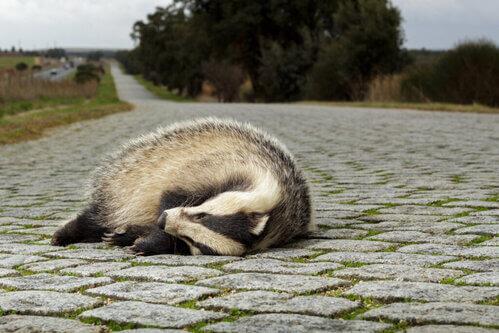 Trappola ecologica: perché è un problema per gli animali?