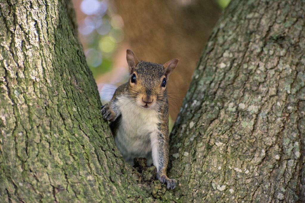 7 curiosità sugli scoiattoli: scopriamole insieme!