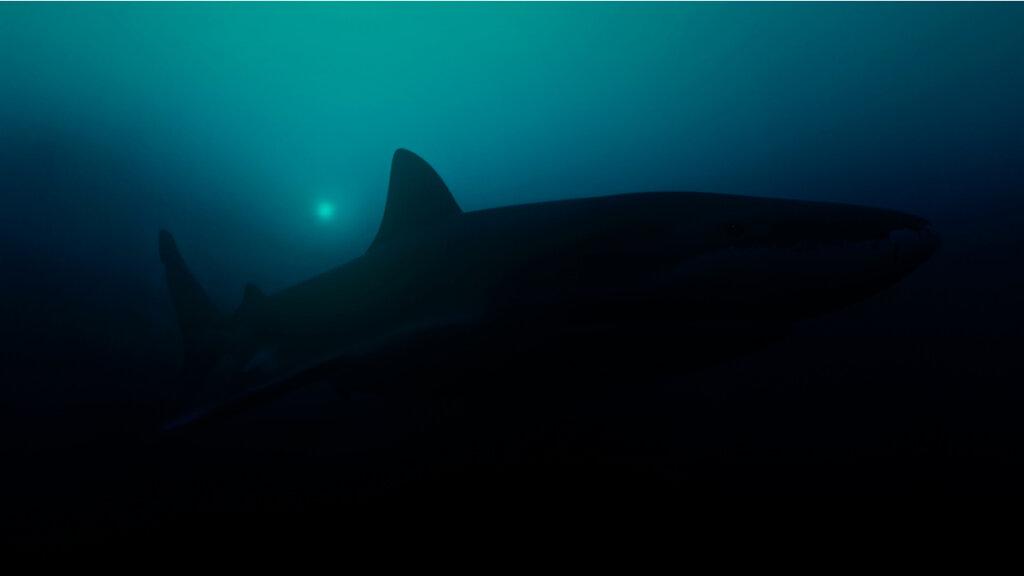 Trovato lo squalo luminoso più grande del mondo