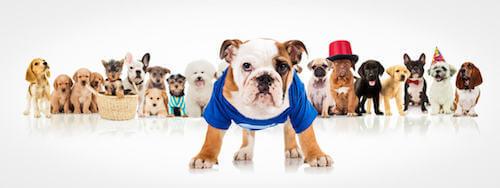 Vestiti per cani.