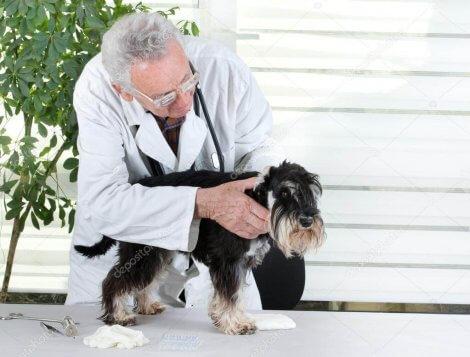 Cane sottoposto a visita veterinaria.
