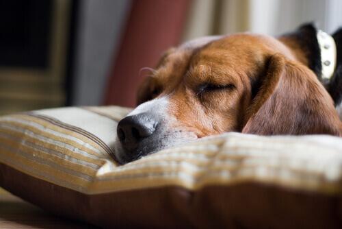 5 segnali che indicano che un cane è in fin di vita