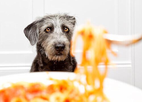 Cane che guarda la pasta.