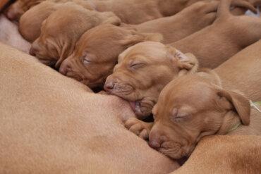 Mortalità neonatale nei cuccioli: 4 cause