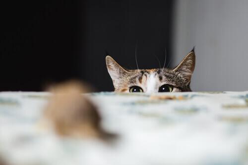Gatto che spunta su da un tavolo.