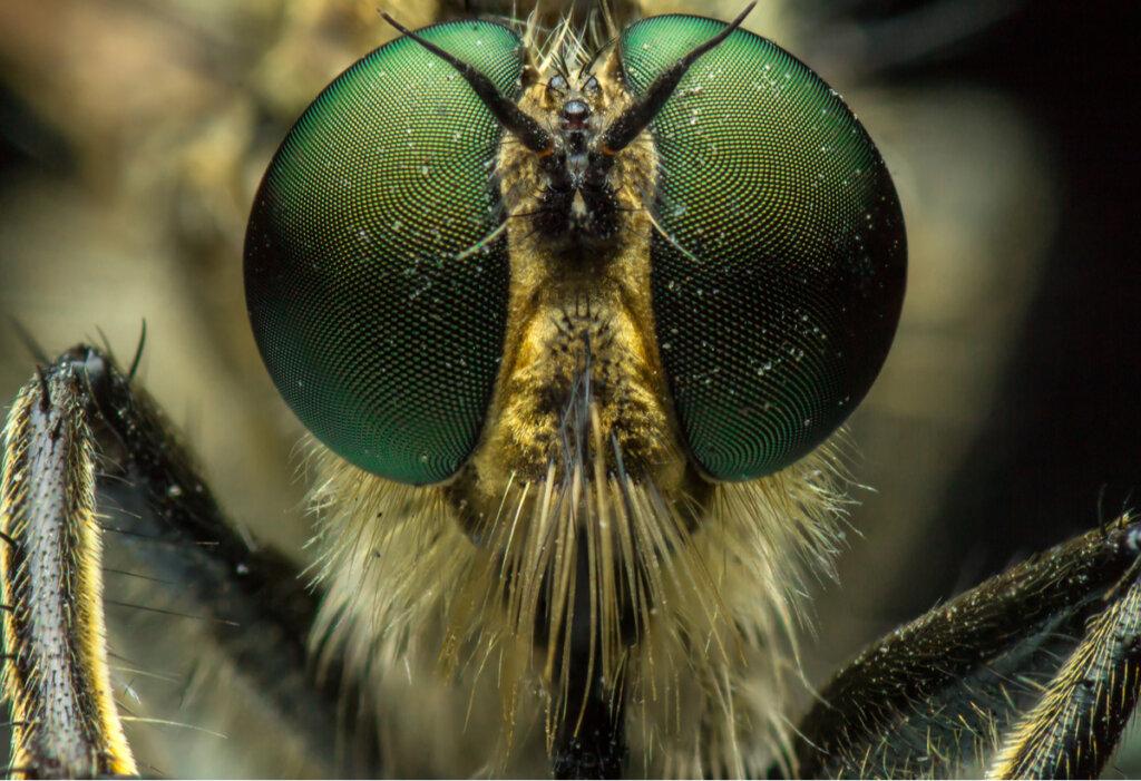 I 10 insetti più rari del pianeta