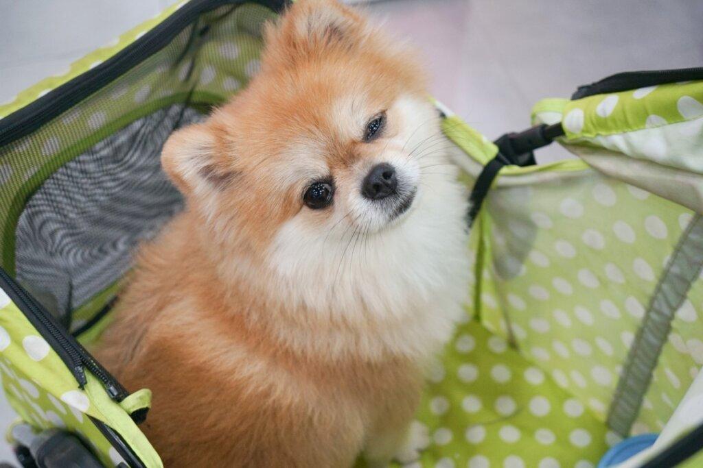 Asilo nido per cani: vantaggi e svantaggi