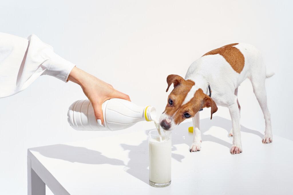 I cani possono bere il latte? Alcuni sì e altri no