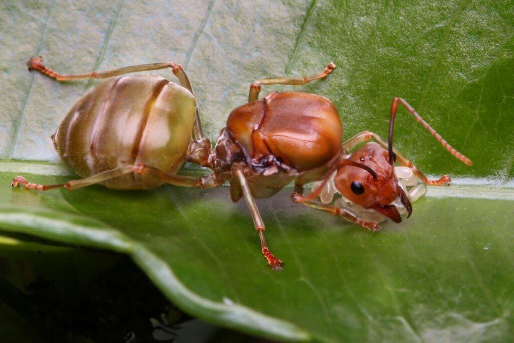 10 tipi di insetti e le loro caratteristiche