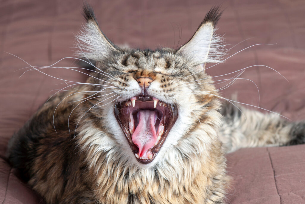 4 miti sui baffi dei gatti: sfatiamoli