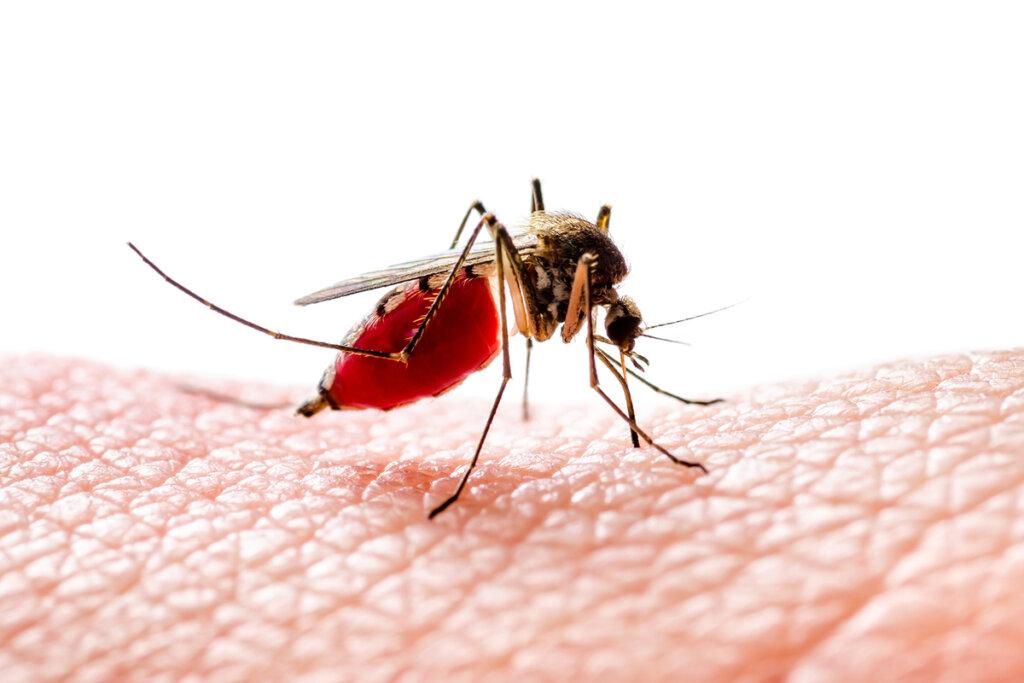 Perché le zanzare mordono alcune persone e non altre?
