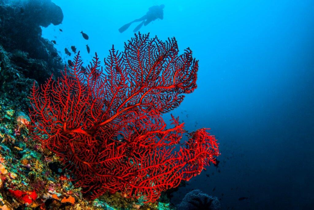 4 tipi di coralli