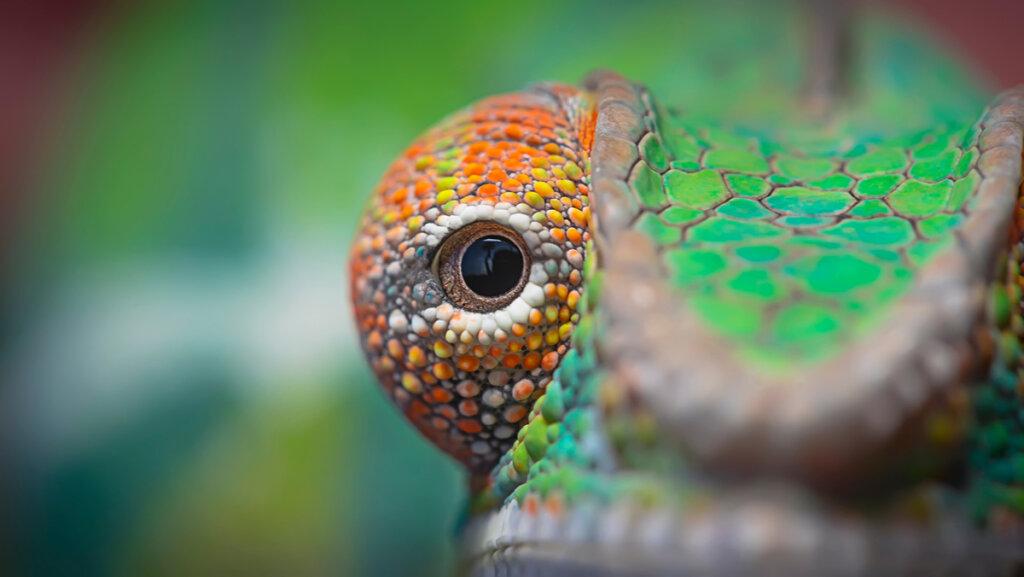 5 animali con grandi occhi: scopriamoli insieme