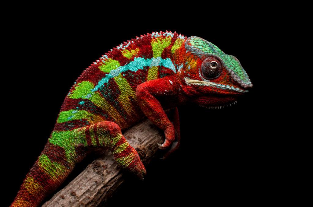 9 animali unici del Madagascar