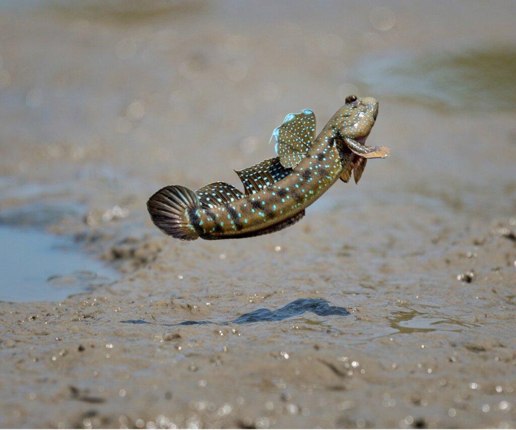 7 pesci che respirano fuori dall'acqua