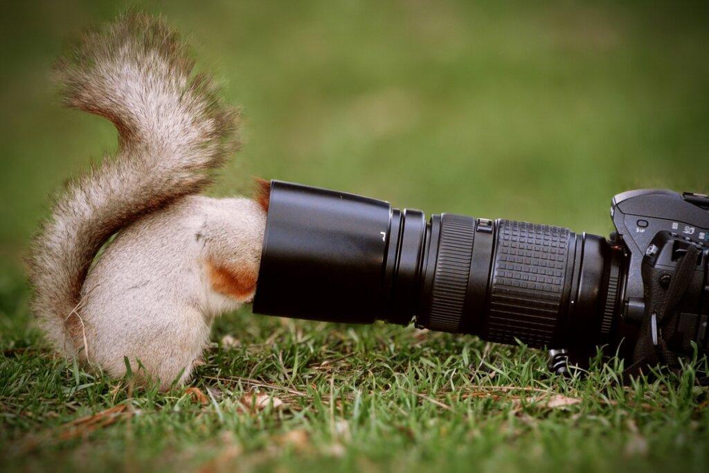 I 5 migliori documentari sugli animali