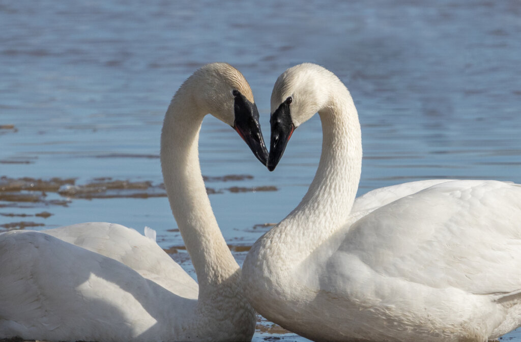 7 strani tipi di accoppiamento: le molte forme dell'amore