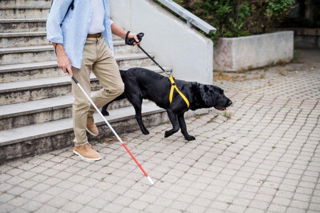 Addestramento del cane guida: come si fa?