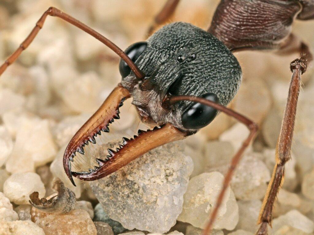 Perché le formiche sono così importanti negli ecosistemi?