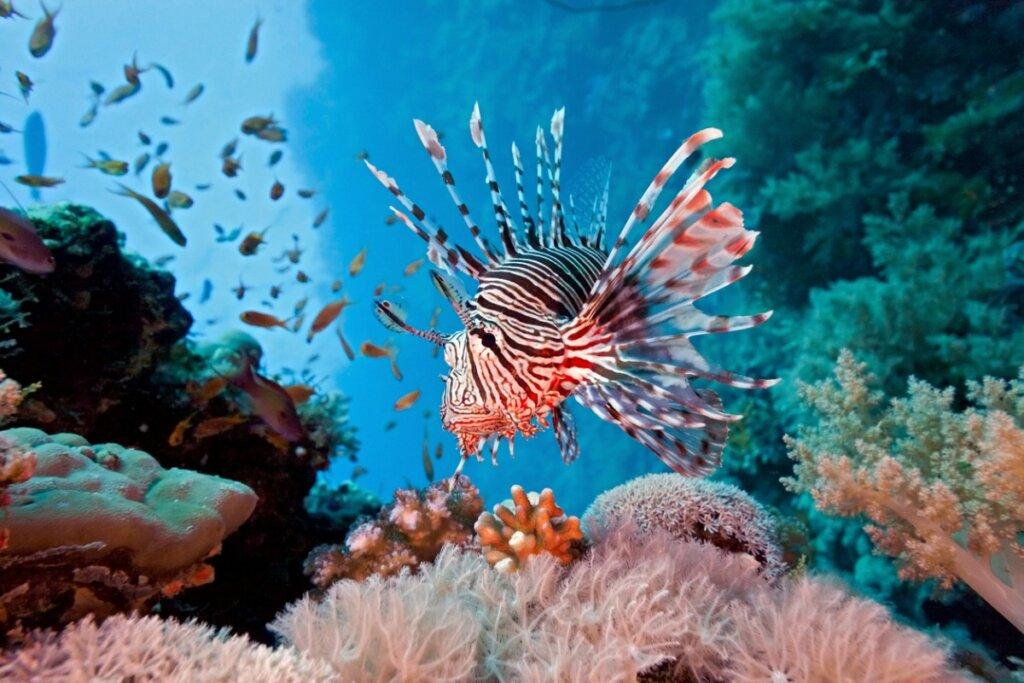 I 12 pesci più pericolosi del mondo