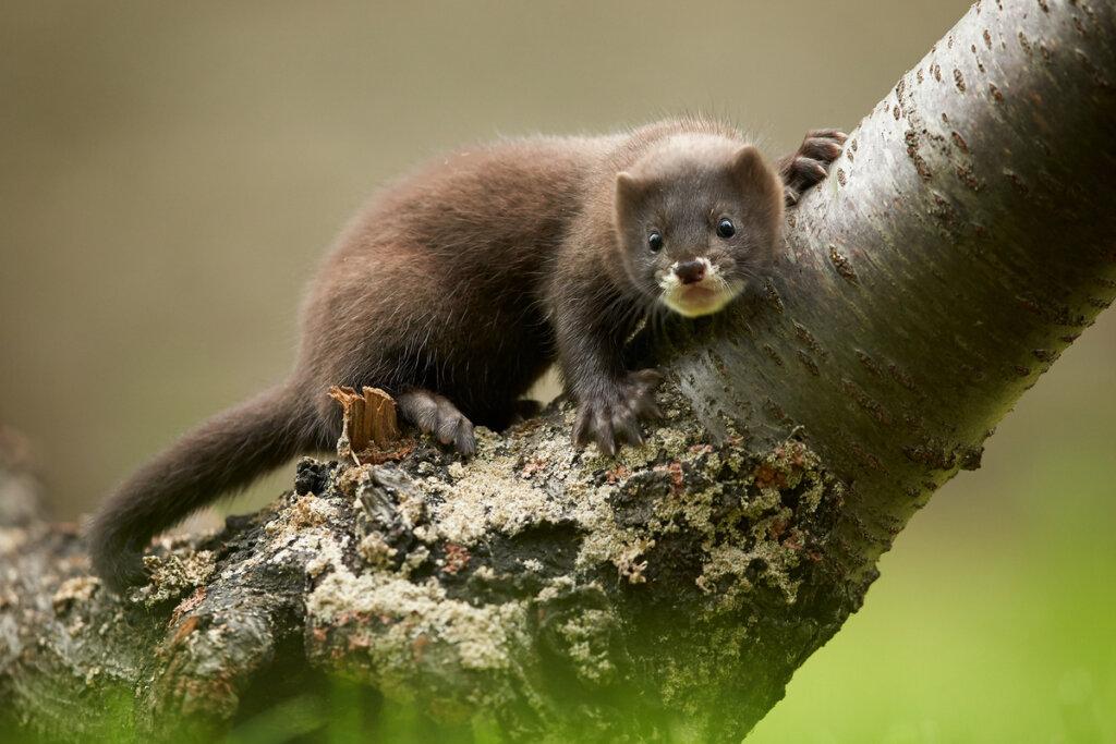 11 animali in pericolo di estinzione in Spagna