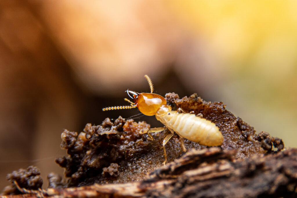 10 insetti che mangiano il legno