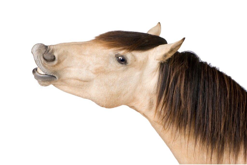 Perché i cavalli nitriscono?