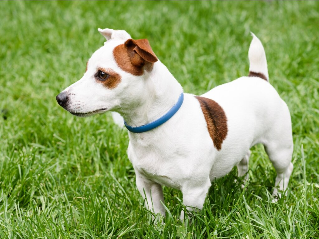 Collare antiparassitario per cani: quale scegliere?