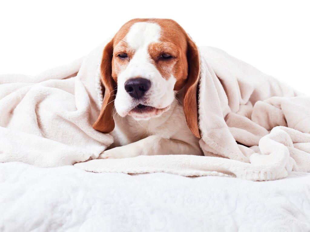 Faringite nei cani: tutto quello che c'è da sapere