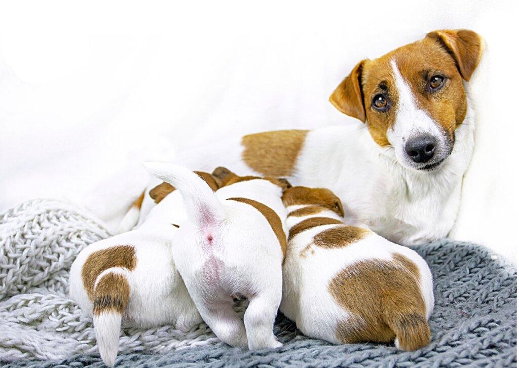 5 passi per lo svezzamento dei cuccioli