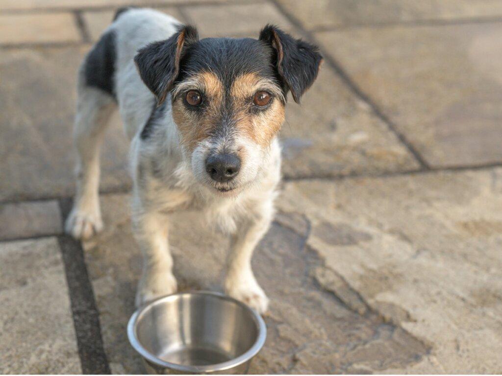 10 sintomi di malnutrizione nei cani