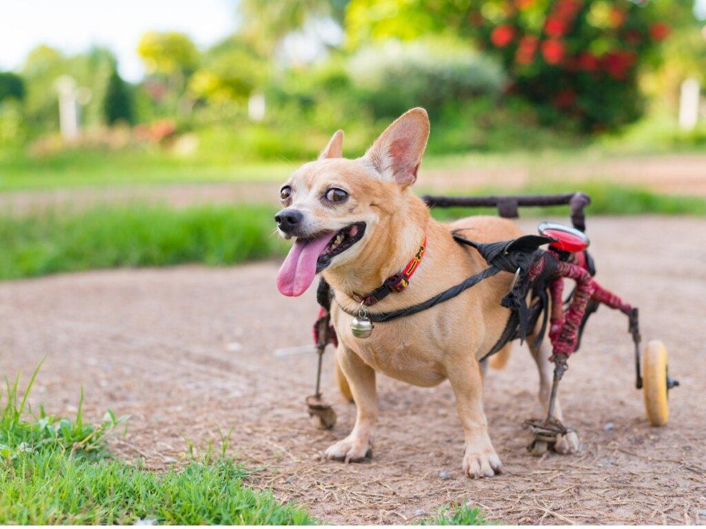 Ortopedia per cani: tutto quello che c'è da sapere