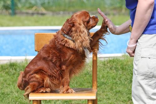 Intelligenza e realtà emotiva dei cani
