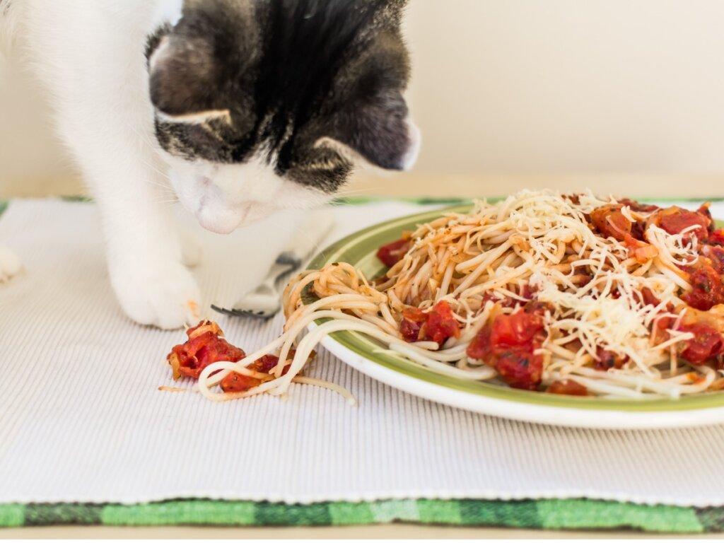 I gatti possono mangiare la pasta?