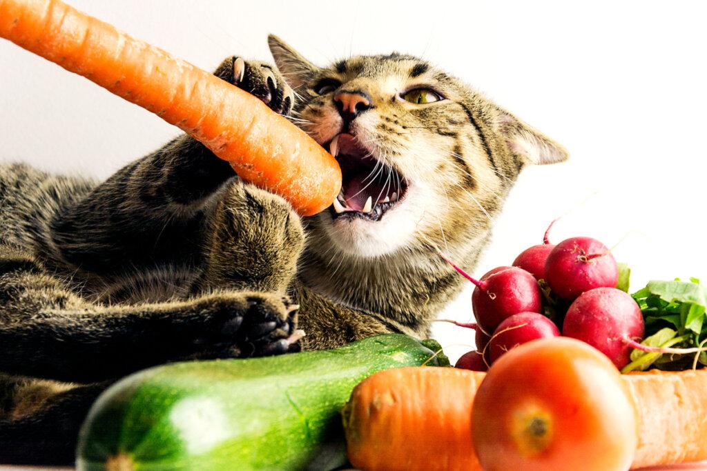 Diete vegane per animali domestici: parlano gli esperti